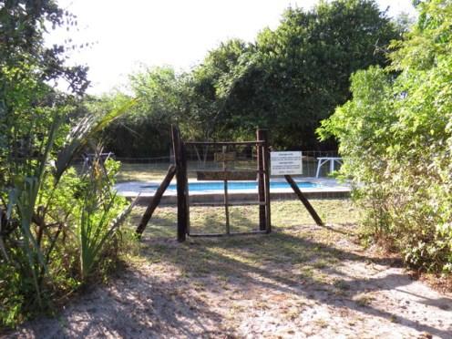 Ilala Palm swimming pool