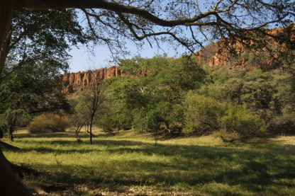 Waterberg Cliffs and tall treed green valley