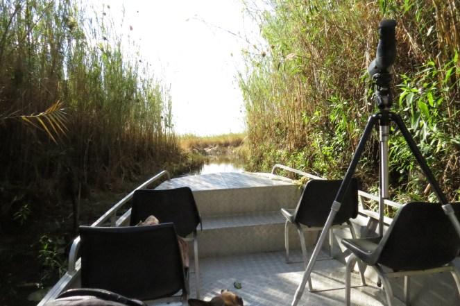 Exiting Shamvura through the reeds