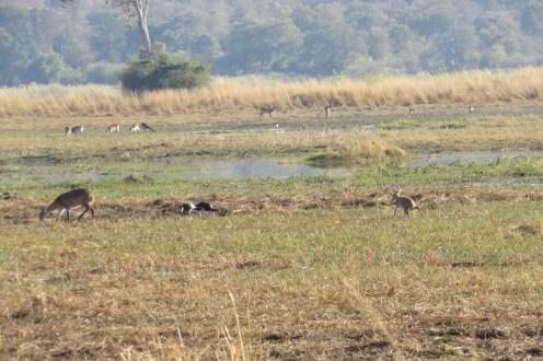 Wetland Area - Mahango