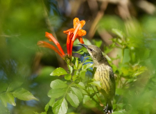 Sunbird. Which one