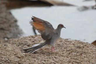 Diamond Dove, Ferguson River