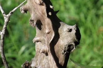 Gnarly Tree Trunck