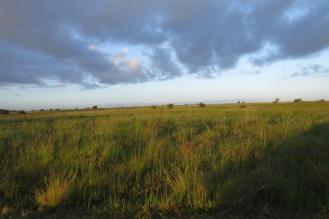 Western Shores Habitat