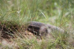 Python close up