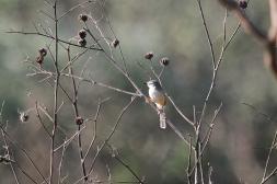 Mystery Bird - TFP.