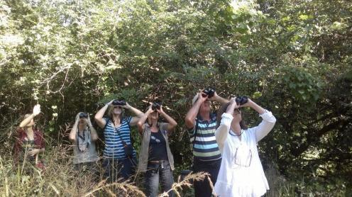 Birders in action