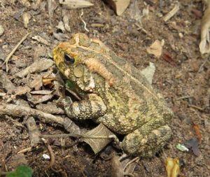 Clicking Stream Frog