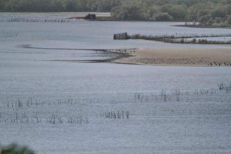 Distant sandbank with Tern roost