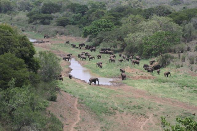 Elephants, Buffalo and White rhinos.