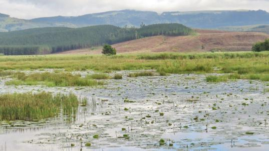Wetland from the hide