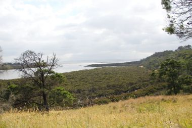 View of mangroves leading to the mudflats in the Rhyll estuary