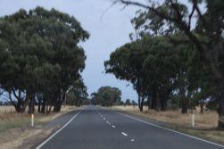The odd copse of trees