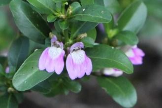 Unknown Forest flower