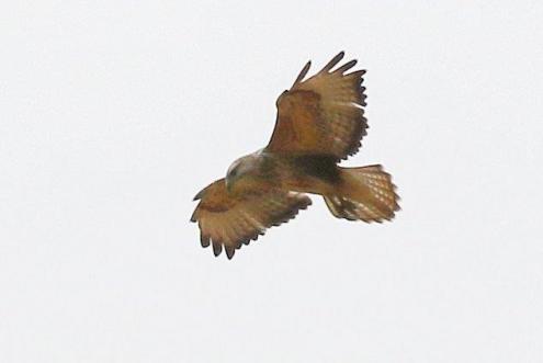 UI Bird