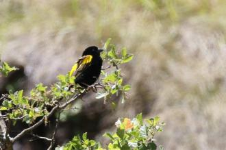 Yellow Bishop