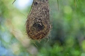 Bird's nest - John Bremner