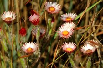 Flowers - Elton Bartlett
