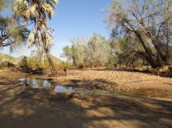 Banks of the Kunene River