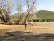 Banks of the Kunene River - some of our best birding along here. Numerous special Kingfishers