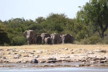Elephants - here we come