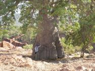 Baobab and Paul