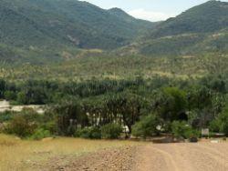 And down into the Makalani Palms