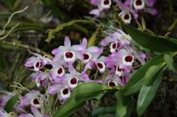 Flower - John Bremner