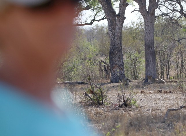 Sally in the Mandenzeni Picnic site but what is over her left shoulder - yes lions