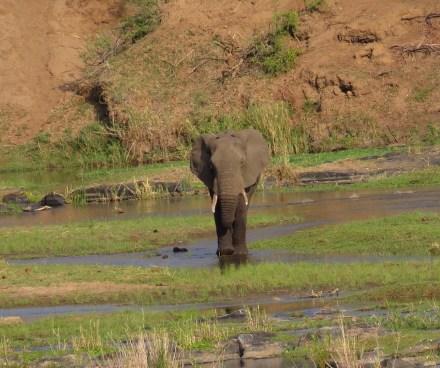 Elephant wader