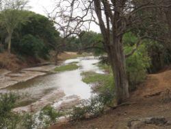 Luvuvhu River Scene