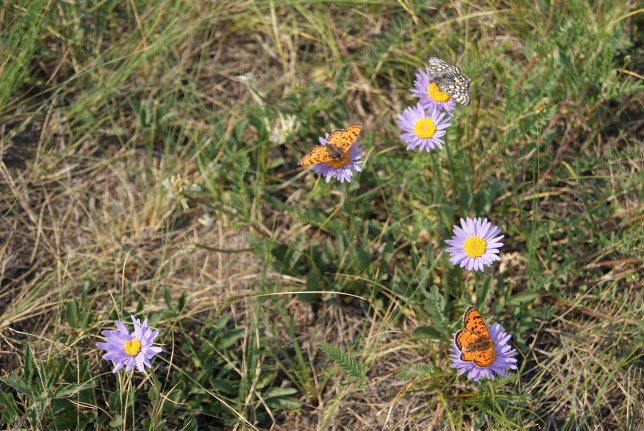 Flowers and butterflies, despite the dry summer.