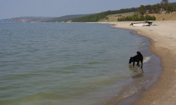 """There were plenty of dogs running around the village and the coast, belonging to """"everybody and nobody."""""""