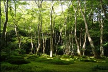The moss garden at the temple Gio-ji. Japanese gardens are just as calmly elegant as expected.