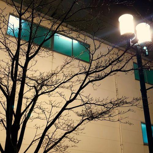 【Instagram】街頭と葉のない木。少しだけ淋しい気分になる。