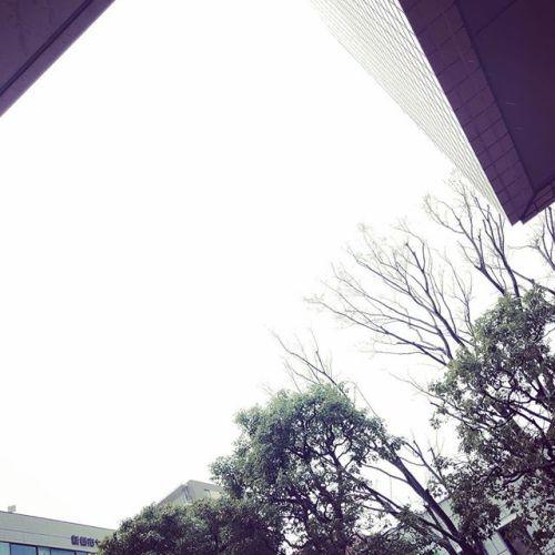 【Instagram】今日の雨空。