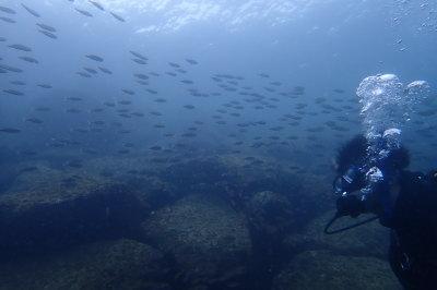 見上げる魚群