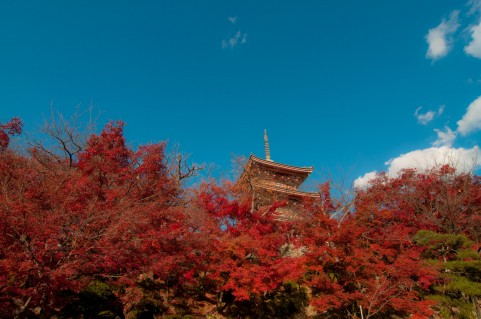 Fall foliage in Kiyomizu-dera temple. It is one of Must-See spots in Kyoto.
