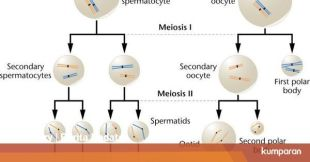 Department of Meiosis in Gamete Formation