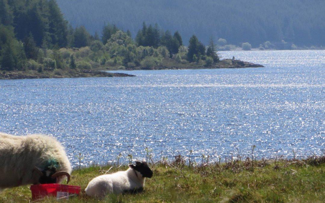 Loch Doon Plus 11 Sided Castle in Scotland