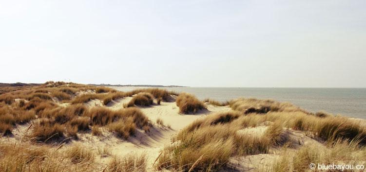 Blick auf die Dünen und das Meer am niederländischen Banjaardstrand.