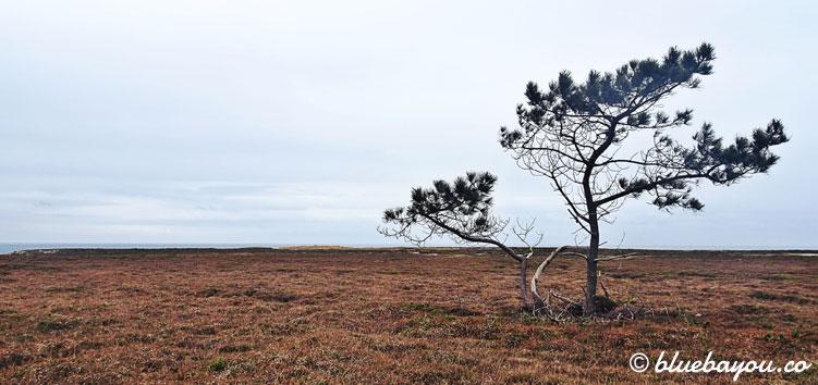 Das Ende der Welt: ein einsamer Baum am Ende einer Sackgasse.