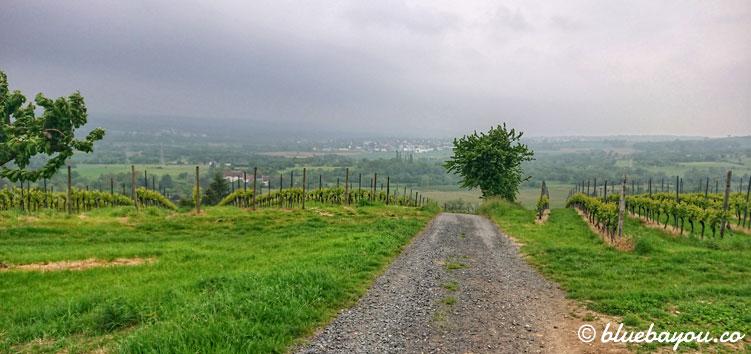 Geschafft: ich lasse die Weinberge hinter mir und bin fast am Ziel der 72,36 km langen Wanderung.