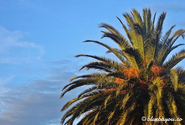 Eine Palme entlang des Jakobsweg im Februar.