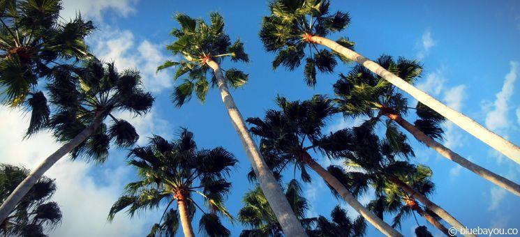 Relaxen unter Palmen nach abenteuerlichen Tagen in Orlando.