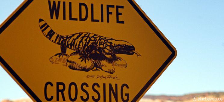 Ein Wildlife Crossing Schild: Orte, an denen wildlebende Tiere garantiert zu sehen sind, wäre ein Insidertipp.