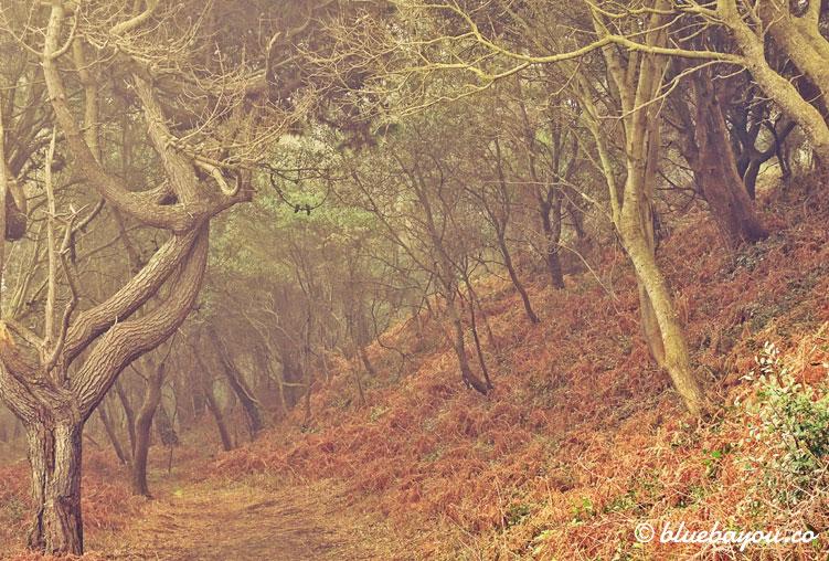 "Waldweg entlang des Wanderwegs ""Ruta de la Costa""."