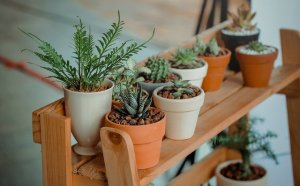 Green potted plants