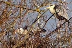 Weirwood Reservoir Heronry