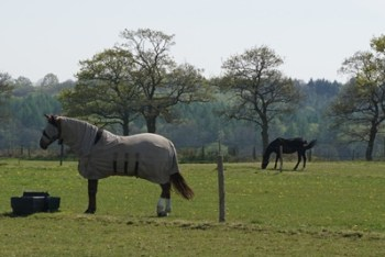 Horses at Town Place Farm